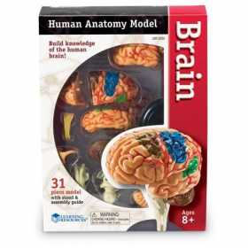 Corpul uman - Creierul - 31 piese - Set educativ pentru copii Learning Resources